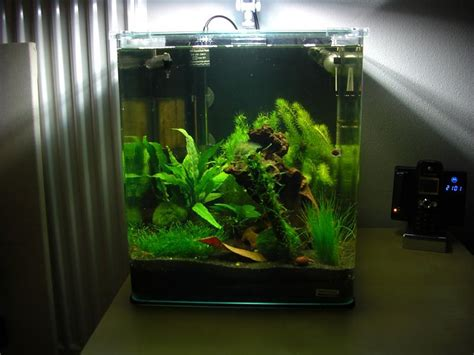 beleuchtung 60l aquarium nano cube forum pics photos mein dennerle nano cube 30l