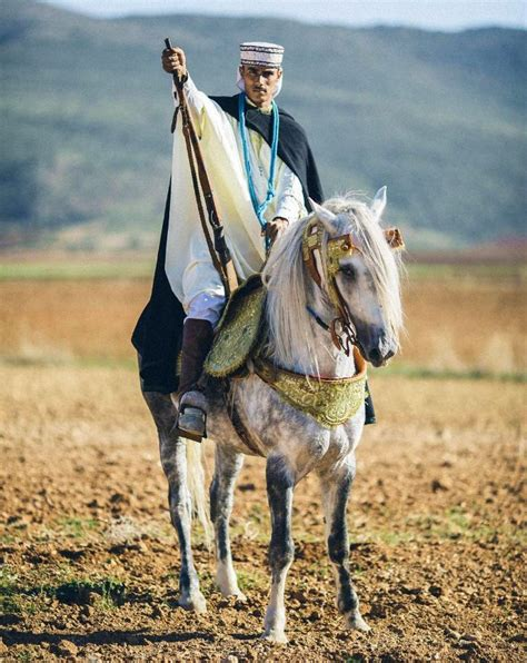 1000 images about horse party on pinterest horse algerian rider on barb horse horses pinterest horse