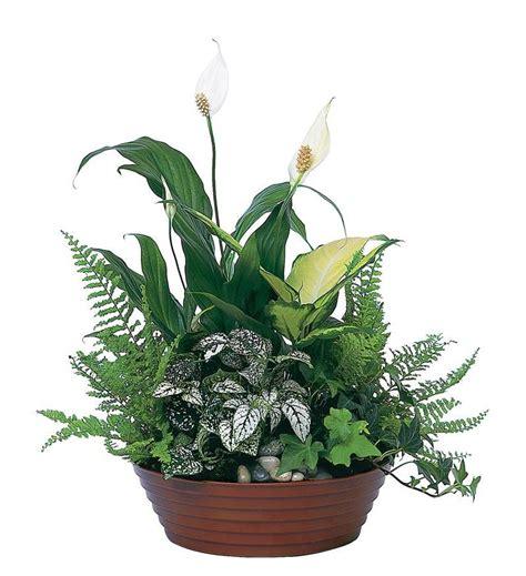 Plants For Formal Gardens - white garden tf139 2 50 36