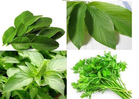 Tanaman Bumbu Daun Kari dapur halal bumbu daun pelezat masakan alami