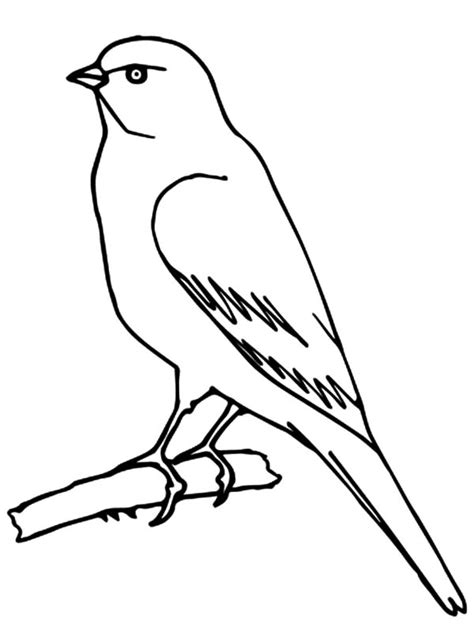 coloring pages canary bird canary bird coloring page kids coloring page gallery