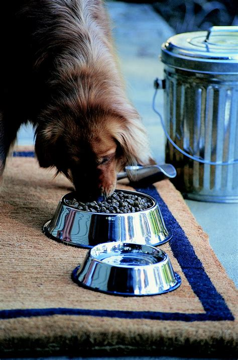 how does it take for dogs to digest food how quickly do dogs digest food cuteness