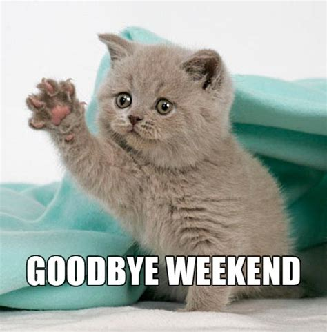 Monday Cat Meme - meme monday goodbye weekend imod digital