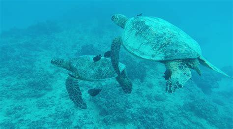 waikiki catamaran snorkeling excursion catamaran turtle canyon snorkel excursion active oahu
