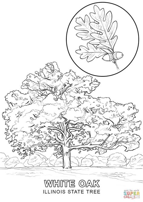 connecticut map coloring page 12 images of delaware state tree coloring page delaware