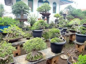 entretien des bonsa 239 s jardinage