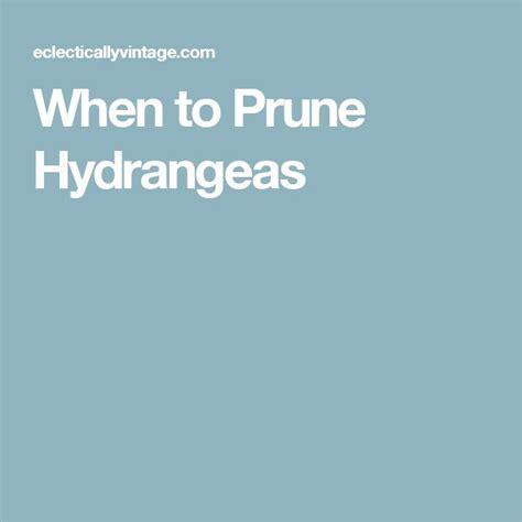1000 ideas about when to prune hydrangeas on pinterest