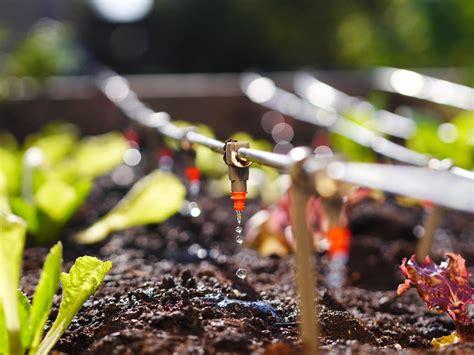 installing  drip water system   garden worth