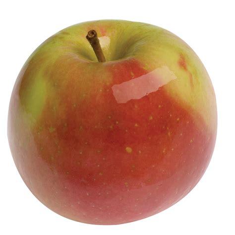 apple fuji apple fuji tri city nursery