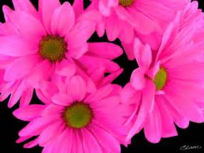 Pictures Of Pink Flowers - pink flowers by cindi lane