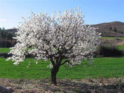 imagenes de flores y arboles 193 rboles y flores imagui