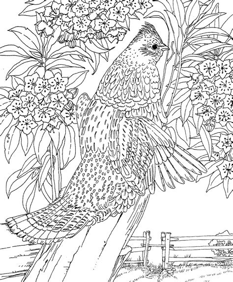 Difficult Animals Coloring Pages For Adults Difficult Coloring Pages