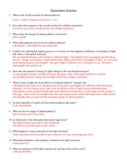 Photosynthesis Worksheet Answers by Photosynthesis Worksheet Answers Worksheets Releaseboard