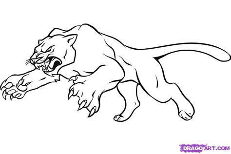 panthers color how to draw a panther step by step rainforest animals