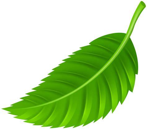 leaf clipart leaf png clip best web clipart