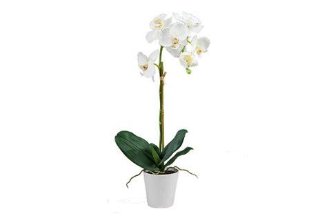 orchidee vaso orchidea con vaso 65cm bianco acquistare da edile hobby