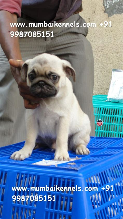 pug puppy names pug names quotes