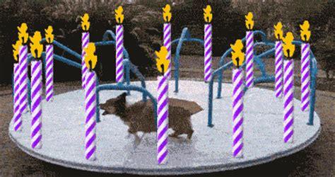 happy birthday puppy gif happy birthday running gif by birthday bot find on giphy
