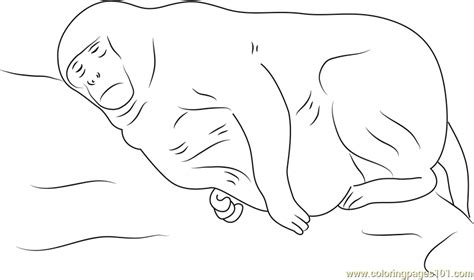 vervet monkey coloring page free coloring pages of vervet monkey