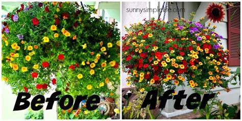 Best Fertilizer For Flower Garden Simple Flower Fertilizer
