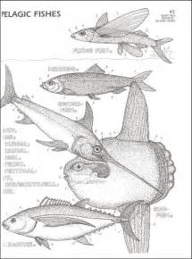 biology coloring book marine biology coloring book 032462 details rainbow