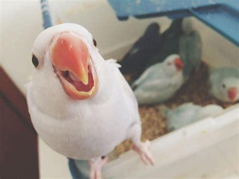 pros  cons  shipping  pet bird