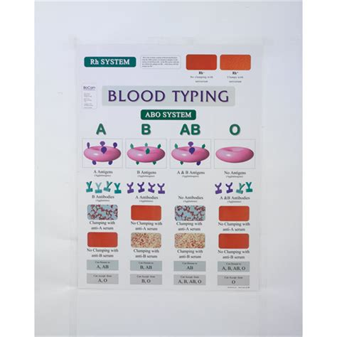 Blood Typing Thesis by Presidential Graduation Speech Pottery Thesis