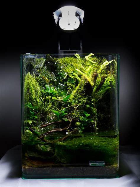 setting aquascape 10 l nano paludarium build aquarium vivarium and plants
