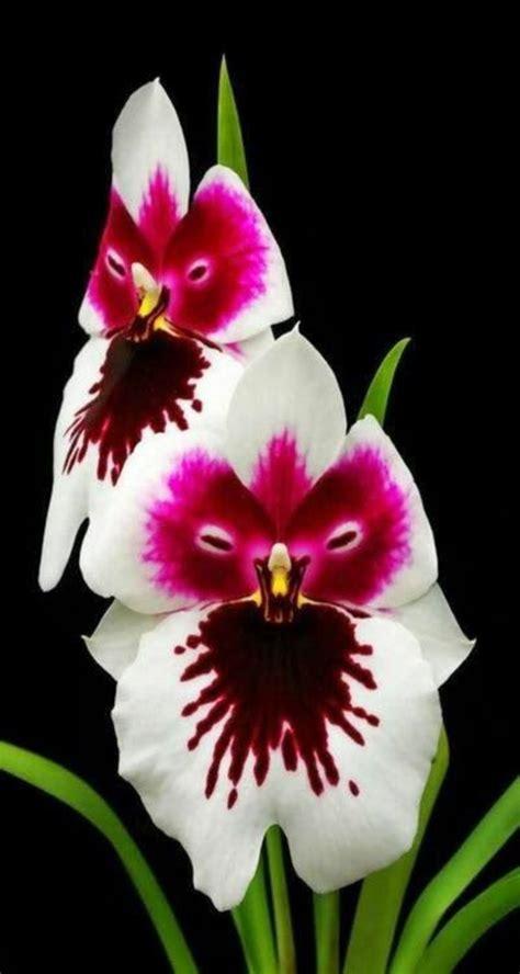 L Orchid 233 E Rare La Plus Bizarre Ou Quand Les Orchid 233 Es