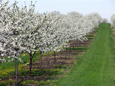 experience the season of blossoms in door county