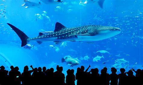 japanese aquarium visiting aquariums in japan japan monthly web magazine