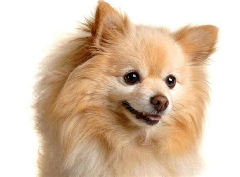 best small breeds the best small breeds before you one pets clan that stay and names of