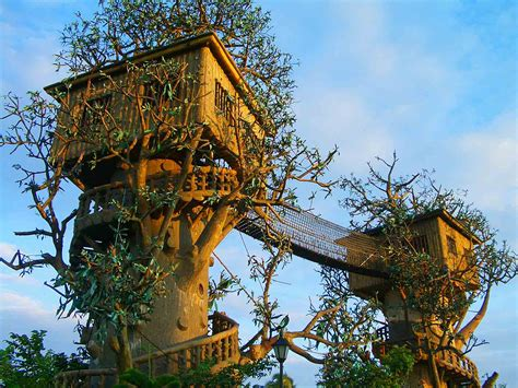coolest tree houses top 20 beautiful and amazing tree house wallpapers pics