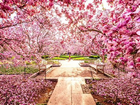 National Cherry Blossom Festival | national cherry blossom festival arts and culture