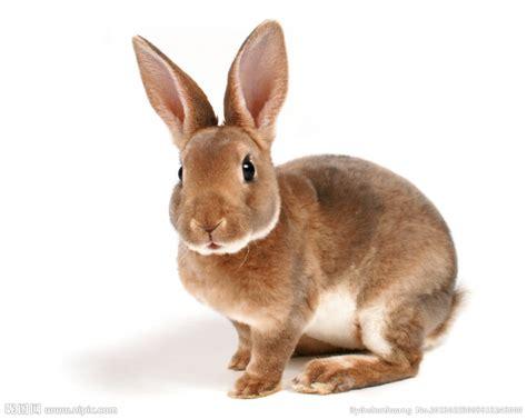 le hase 兔子摄影图 家禽家畜 生物世界 摄影图库 昵图网nipic