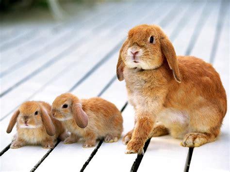 Rabbit Top Sf rabbits wallpapers