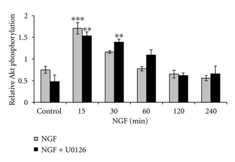 ngf pattern nitric oxide synthase inhibitors modulate nerve growth