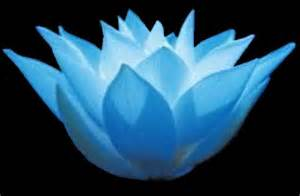 Blue Lotus Blue Lotus Holistic Center Services