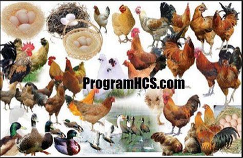 Toko Obat Fermentasi Pakan Ternak aplikasi soc hcs manfaat cara penggunaan soc hcs untuk