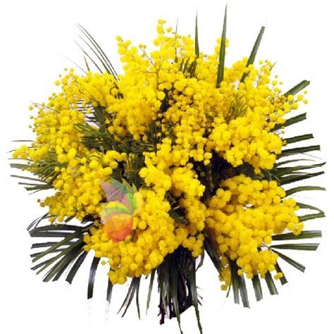 mazzo di fiori con mimose pensiero soave spediamo fiori dolci e regali a domicilio