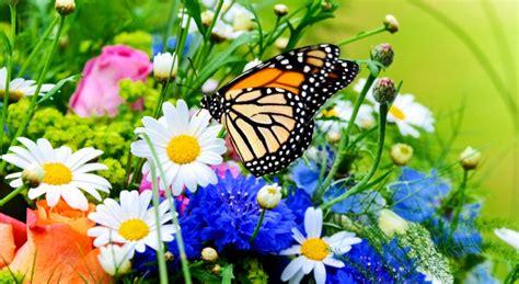 fiori a primavera fiori e banchi di primavera