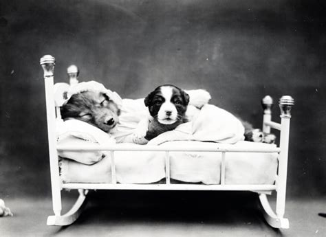 puppy bedtime vintage photo  stock photo public domain pictures