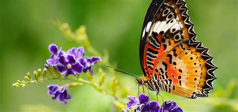 get your home ready for spring how to get your home ready for spring c v mason
