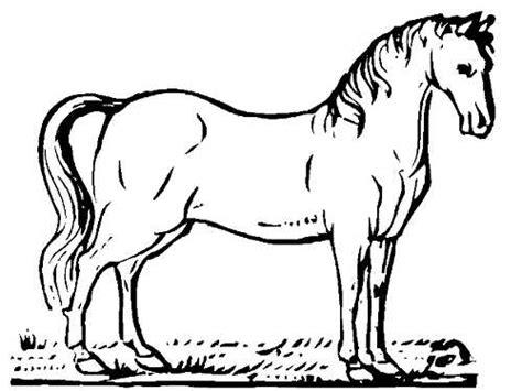 imagenes reales para colorear im 225 genes de animales para colorear dibujos de animalitos