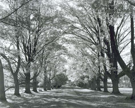 tree farm newbury mass paul wainwright photography