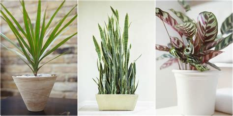 large low light houseplants 10 robust houseplants that can survive in even the darkest