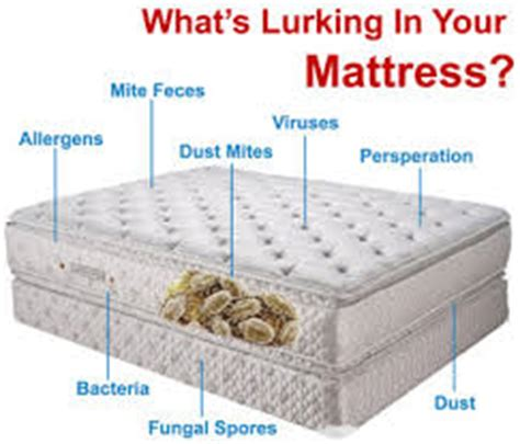 Can Bed Bugs Bite Through Mattress Cover by Dust Mite Bed Bug Mattress Protector