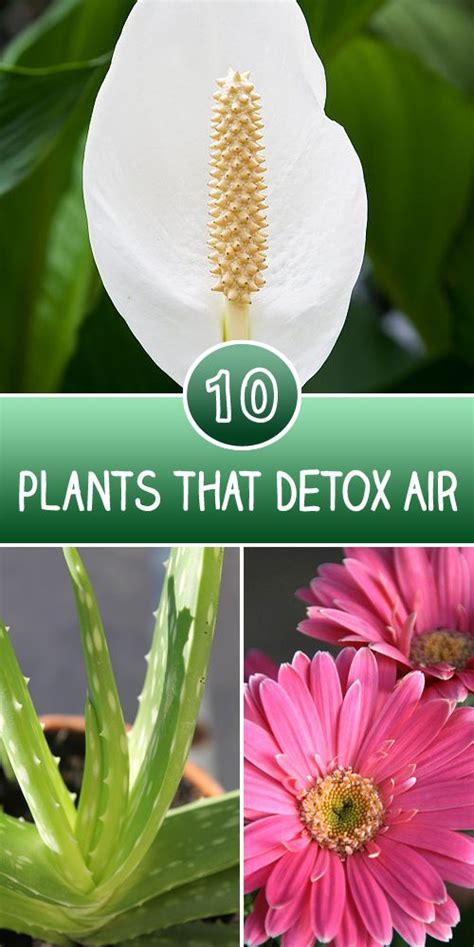 Plantlife Detox by 17 Best Images About Gardening Ideas On