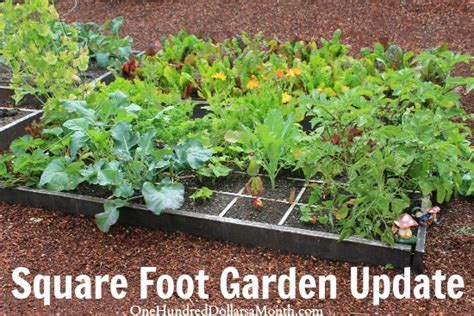 square foot gardening growing vegetables in squares is
