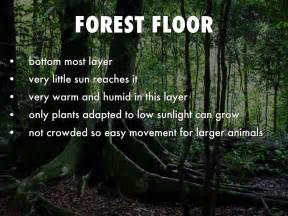 10 Facts About The Forest Floor by Tropical Rainforest By Sapeeda A